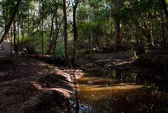 wetlands paintball field hunter valley